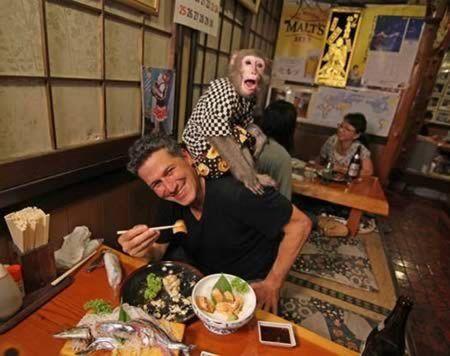 Quán bar Nhật Bản gây sốc với bồi bàn là khỉ - Ảnh 4.