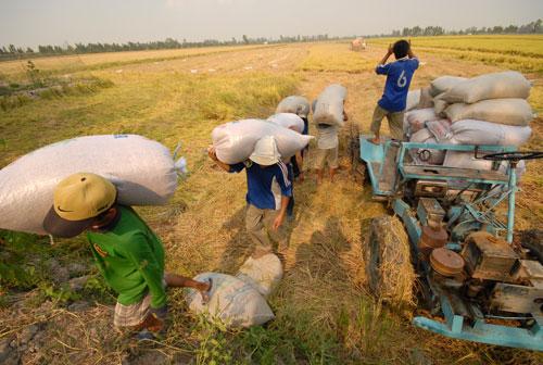 ĐBSCL - vựa lúa lớn nhất nước - cần nhiều chính sách đúng đắn và kịp thời để nông nghiệp cất cánh Ảnh: NGỌC TRINH