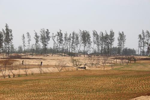 Cả cánh rừng phòng hộ bị phá nát, chỉ còn lại lơ thơ vài cây dương ở dự án Khu Du lịch liên hợp cao cấp New City Việt Nam