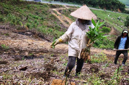 Sau khi nhường chỗ cho thủy điện, chỉ một diện tích nhỏ rừng được trồng thay thế Ảnh: Cao Nguyên