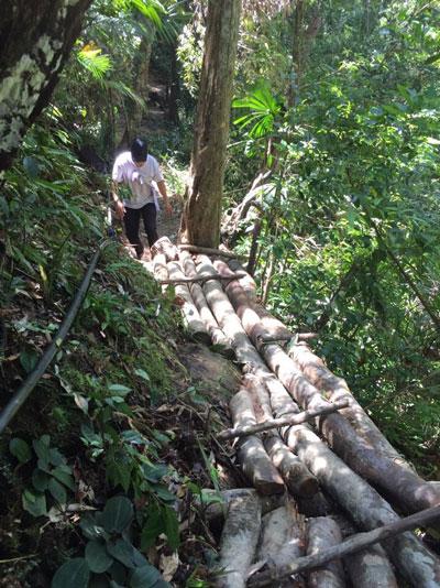 Tàn phá rừng đầu nguồn Khe Đương - Ảnh 1.