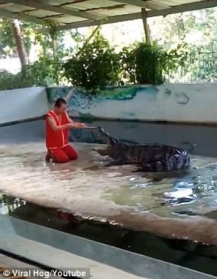 Nghệ sĩ xiếc bị cá sấu cắn khi biểu diễn - Ảnh 1.