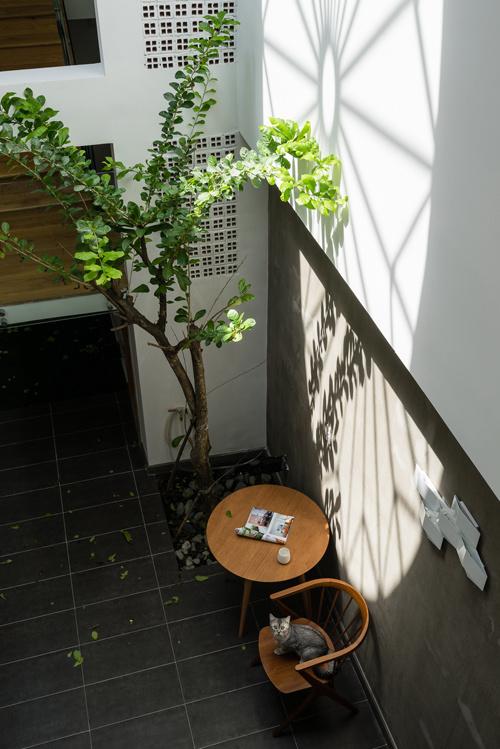Giếng trời tạo hoa nắng lung linh trong nhà ống Sài Gòn - Ảnh 5.