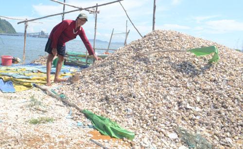 Vụ hải sản chết: Độc tố có dấu hiệu cao hơn bình thường - Ảnh 1.
