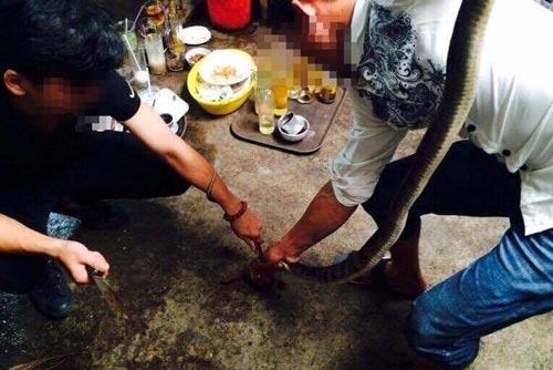 Bắt được con gì cũng sẵn sàng ngâm rượu Ảnh: HOÀNG THANH