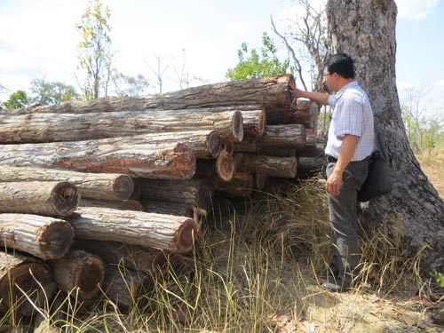 Rừng tại huyện Ea Súp, tỉnh Đắk Lắk vẫn bị tàn phá Ảnh: CAO NGUYÊN