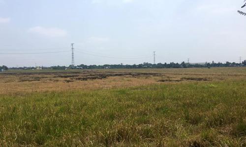 Đất nông nghiệp tại Bình Chánh tăng giá gấp đôi chỉ trong 4 tháng qua. Ảnh: V.L