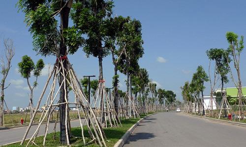 Giá đất xung quanh một dự án phức hợp tại quận Tân Phú đang được giao dịch ở mức 60-70 triệu đồng mỗi m2. Ảnh: C.C