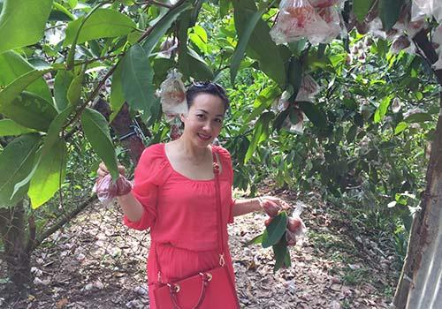 Vườn trái cây manh mún, nhỏ lẻ dẫn đến giá thành cao