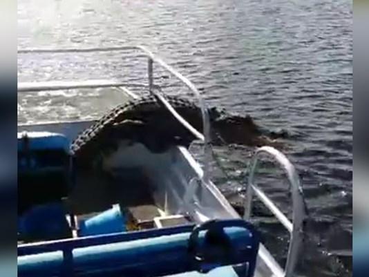 Con cá sấu bất ngờ lao xuống thuyền khiến mọi người hoảng loạn. Ảnh: Miami Herald