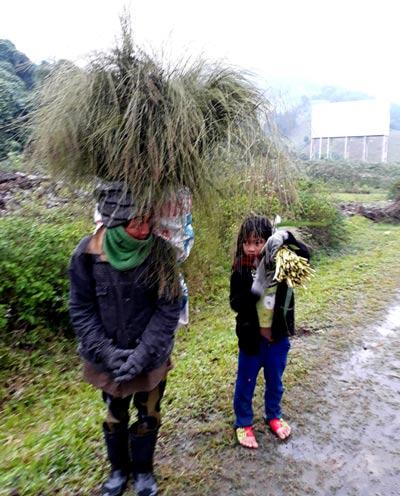 Nhiều học sinh miền núi Quảng Trị nghỉ học đi hái đót về bán. Ảnh Hà Phong