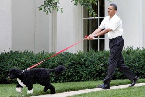 Chú cho cưng nhà ông Obama chiếm nhiều tình cảm của người dân Mỹ. Ảnh: Polination