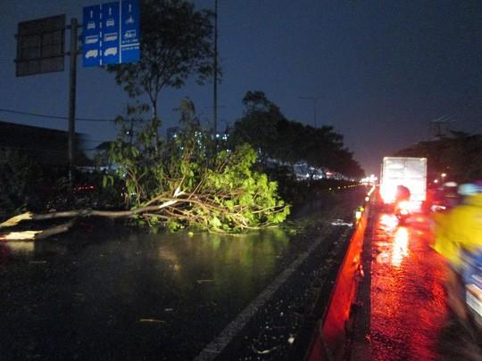 Bão số 14 gây mưa to gió lớn ở TP HCM - Ảnh 16.