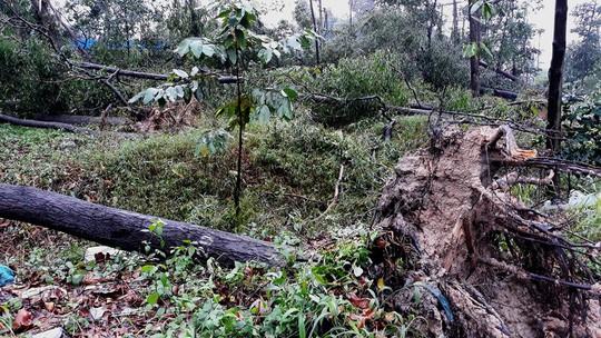 Ảnh hưởng bão số 14, nhiều nơi ở TP HCM thiệt hại nặng - Ảnh 3.