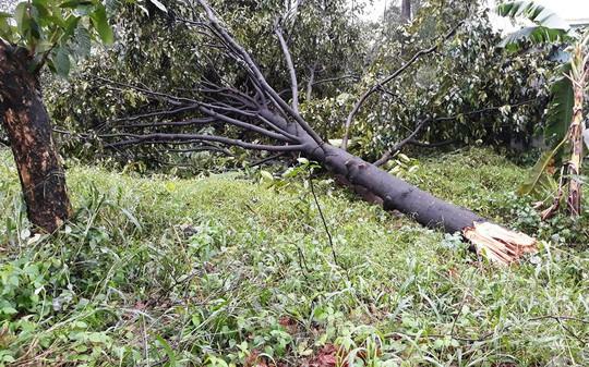 Ảnh hưởng bão số 14, nhiều nơi ở TP HCM thiệt hại nặng - Ảnh 4.