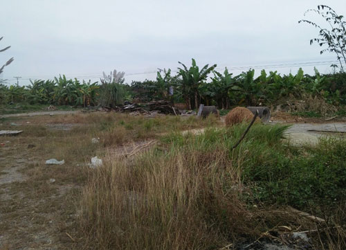 Khu đất DN tư nhân Lai Vu được cấp phép cho thuê sau 5 năm vẫn um tùm cỏ dại