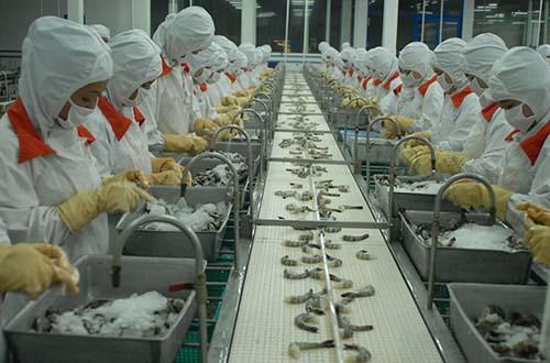 Tôm là mặt hàng xuất khẩu chủ lực của Việt Nam