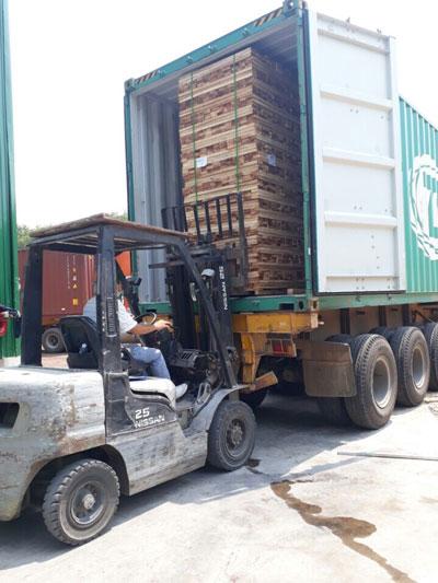 Giá gỗ nguyên liệu trong nước tăng cao do doanh nghiệp Trung Quốc tranh mua