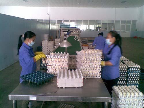 Vỉ đựng trứng bằng giấy thân thiện môi trường