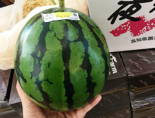 Những trái cây Nhật giá tiền triệu khi về Việt Nam