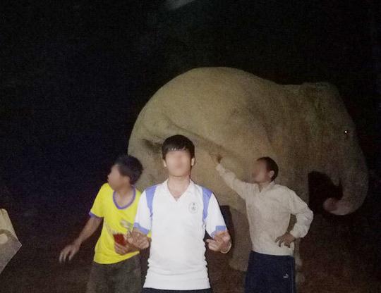 Người dân đùa với voi rừng trong đêm - Ảnh: Đình Đống