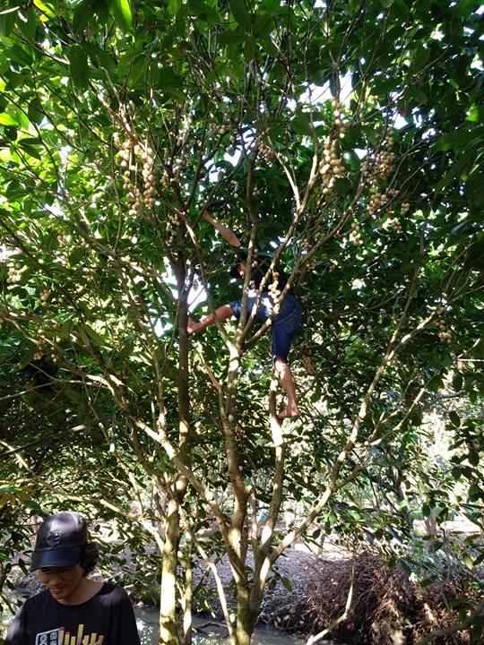 Hết mùa trái cây, nhà vườn vẫn chém ngọt du khách - Ảnh 1.
