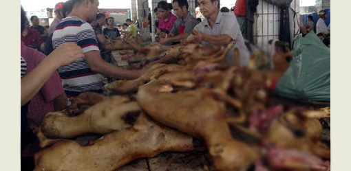 Lễ hội thịt chó Trung Quốc bất ngờ được tổ chức - Ảnh 1.