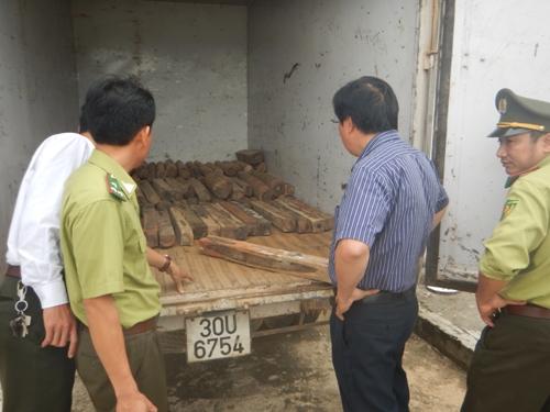 100 khúc gỗ Hương Giáng bị bắt giữ – ảnh VQG Phong Nha – Kẻ Bàng cung cấp