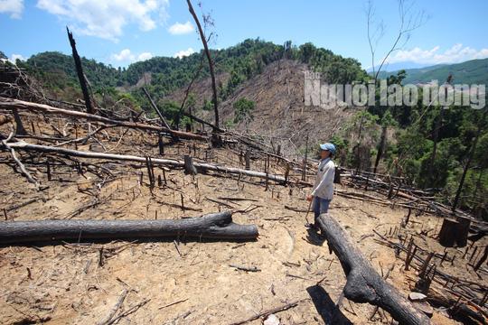 Thủ tướng yêu cầu điều tra vụ phá rừng ở Quảng Nam - Ảnh 1.