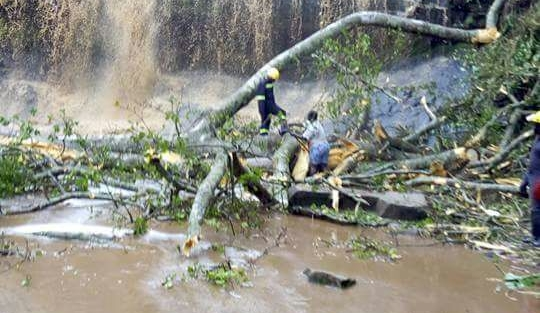 Cây rơi từ đỉnh thác xuống. Ảnh: News Ghana