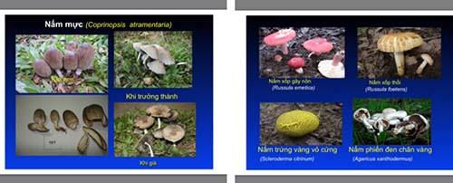 Một số loại nấm độc được bác sĩ khuyến cáo người dân không ăn