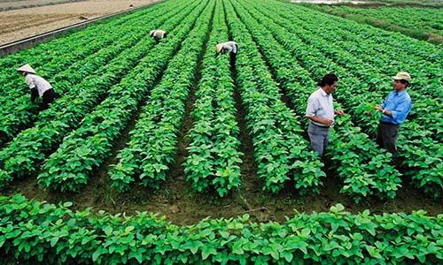 Nhiều doanh nghiệp, tập đoàn lớn đang có xu hướng đầu tư vào nông nghiệp Ảnh: MARD