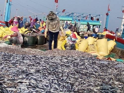 Hàng trăm tấn cá nục của ngư dân khai thác được đổ tràn trên cảng chờ tiêu thụ