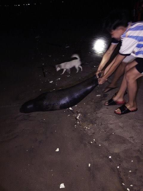 Con hải cẩu bị chết với nhiều vết thương trên đầu (ảnh do người dân cung cấp).