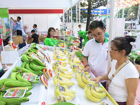 Chuối xuất khẩu đi Nhật được giới thiệu tại một triển lãm tổ chức mới đây tại TP HCM. Ảnh: QH
