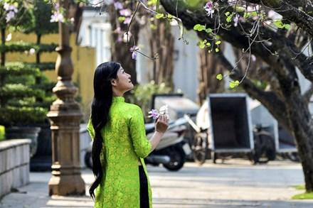 Trên nhiều tuyến đường ở thủ đô Hà Nội, những nhành hoa ban của núi rừng Tây Bắc đang bừng nở khoe sắc