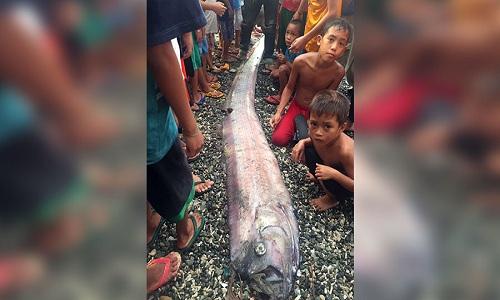 Cá máy chèo dài khoảng 4,5 m dạt vào bờ biển Philippines trưa ngày 18-2.