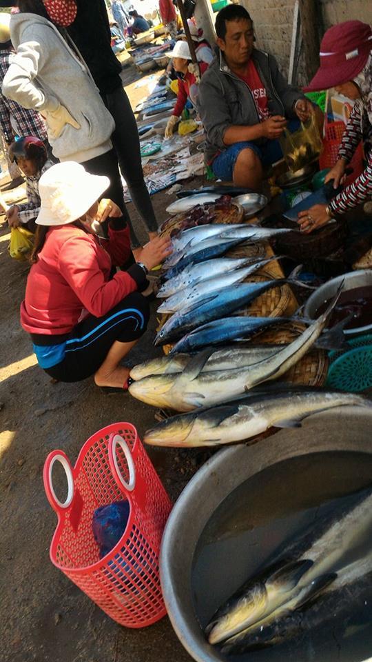 Có rất nhiều loại cá được du khách lựa chọn
