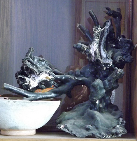 Một cây dương biển hay còn gọi san hô đen tại nhà của anh D. mà chúng tôi có dịp diện kiến.