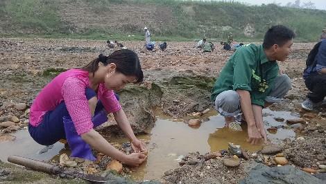 Rất nhiều người dân đã bỏ bê công việc đồng áng, ruộng nương để đi đào đá đỏ.