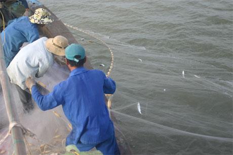 Xôn xao mùa cá đối ở Gò Công Đông - Ảnh 1.