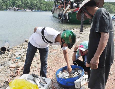 Sớm mai ghé thăm bến cá vùng nước lợ - Ảnh 1.