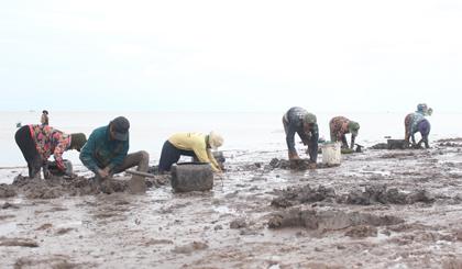 Sướng với mùa săn chem chép biển ở miền Tây - Ảnh 1.
