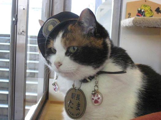Nhật Bản bổ nhiệm chó, mèo, tôm hùm là trưởng ga tàu - Ảnh 2.