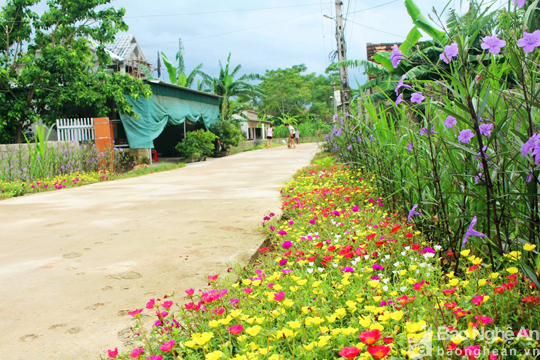 Đẹp ngỡ ngàng con đường hoa ở miền quê Nghệ An - Ảnh 1.