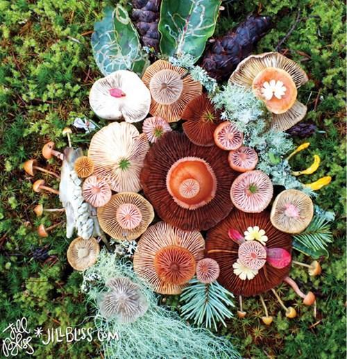 Những cây nấm rực rỡ sắc màu đẹp đến... khó tin - Ảnh 2.