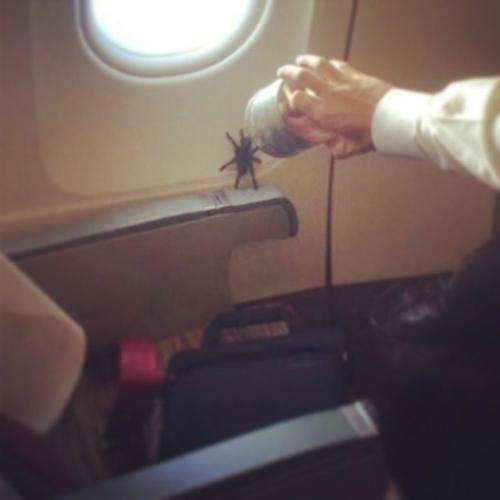 Những điều kỳ quặc bạn có thể nhìn thấy trên máy bay - Ảnh 2.