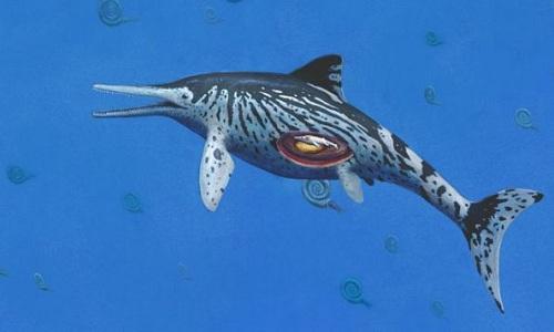 Hóa thạch ngư long 200 triệu năm còn nguyên phôi thai - Ảnh 1.