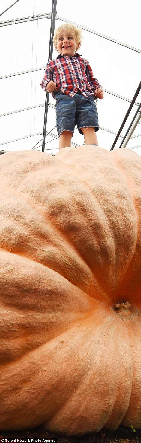 Hai anh em song sinh trồng được trái bí ngô nặng hơn 1 tấn - Ảnh 3.