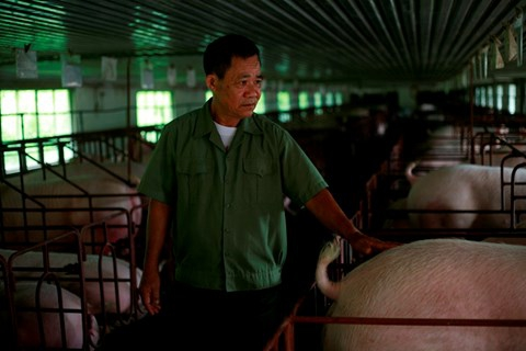 Lên núi thả cá, nuôi lợn, lão nông 71 tuổi thu 20 tỉ đồng/năm - Ảnh 1.